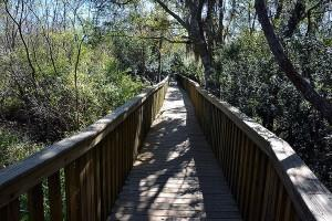 Bridge through wooded area