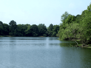 Main lake at Sea Pines Forest Reserve